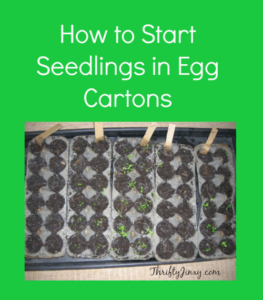 How to Start Seedlings in Egg Cartons