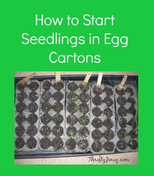 How to Start Seedlings in Egg Cartons
