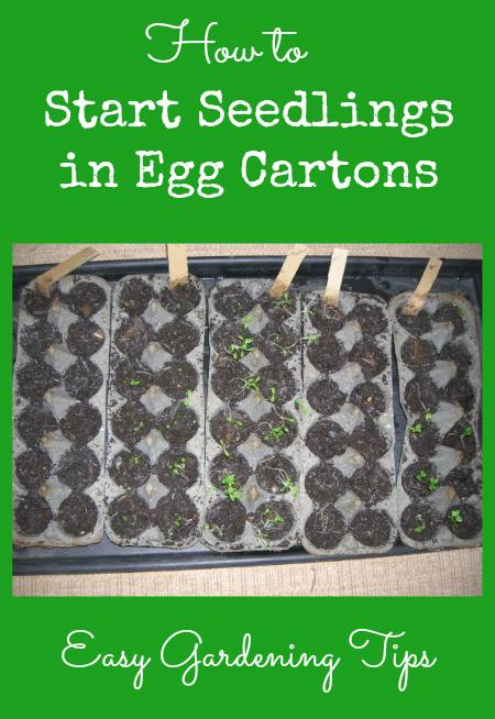Easy Gardening Tips - How to Start Seedlings in Egg Cartons