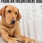PROTECT YOUR CARPET FROM AN INCONTINENT DOG