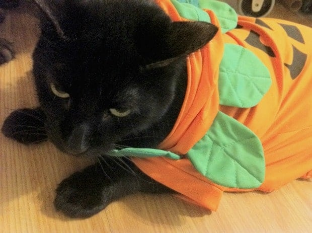 Jinxy Pumpkin Halloween Costume