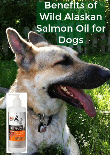 Benefits of Wild Alaskan Salmon Oil for Dogs