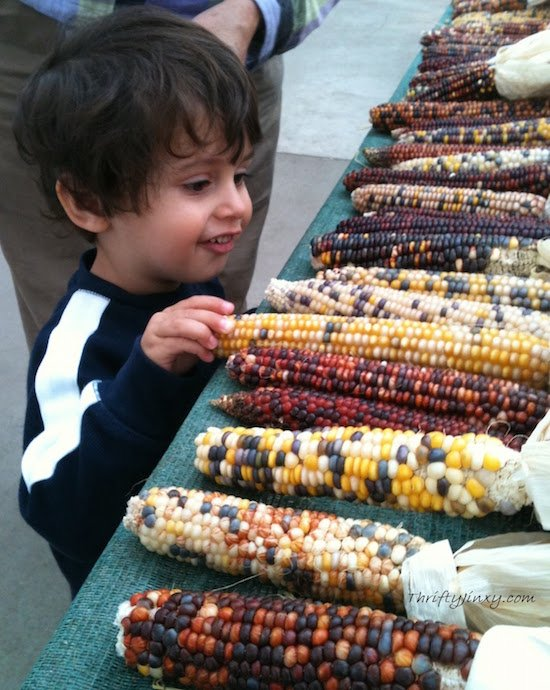 Indian Corn and Little Boy