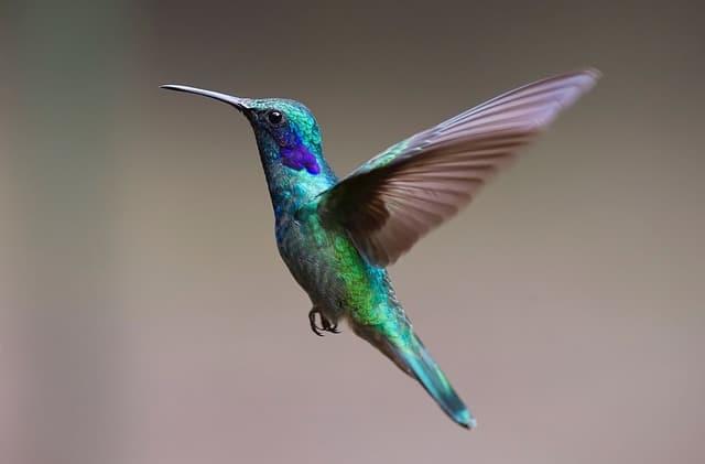 Hummingbird Close Up