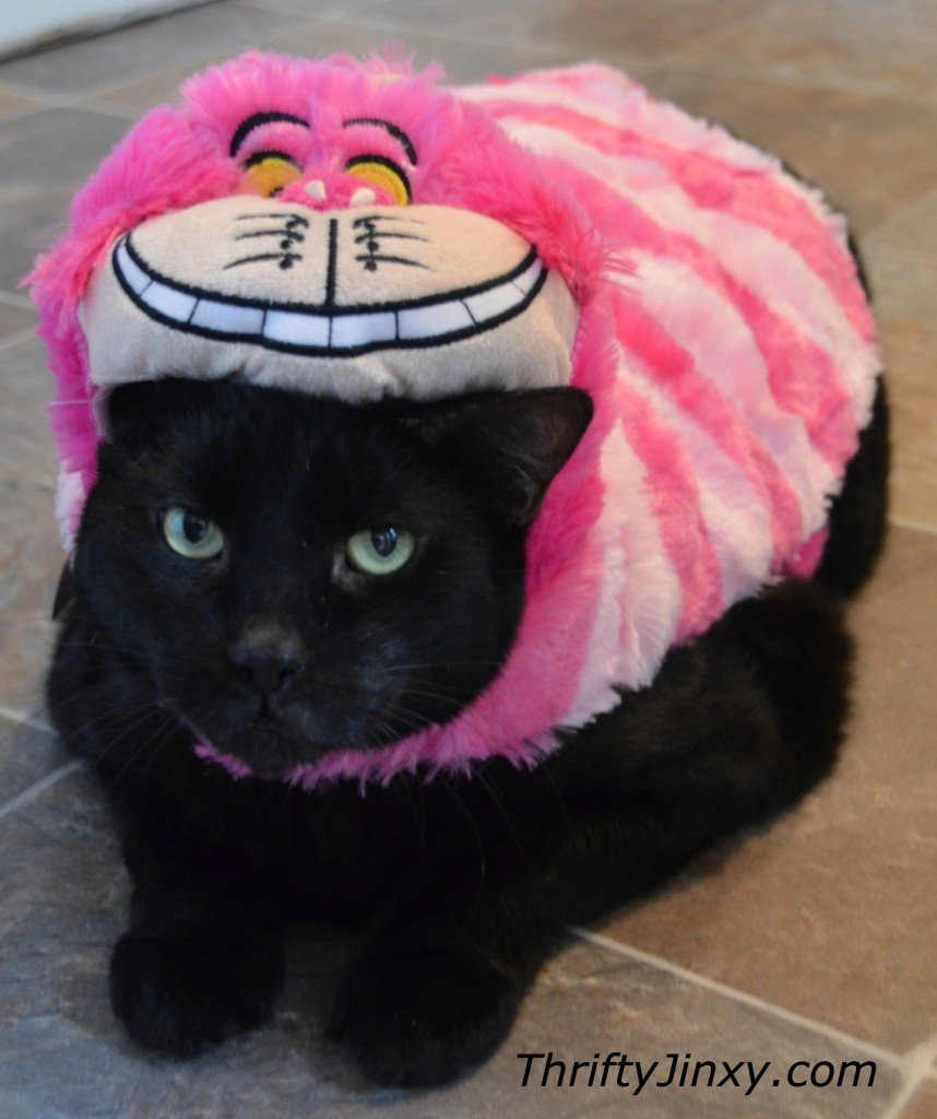 Disney Pet Cheshire Cat Costume