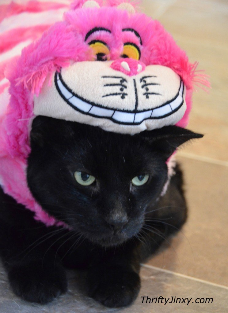 Disney Cheshire Cat Pet Costume & Disney Pet Costumes for Cats and Dogs - Oh So Cute! - Thrifty Jinxy