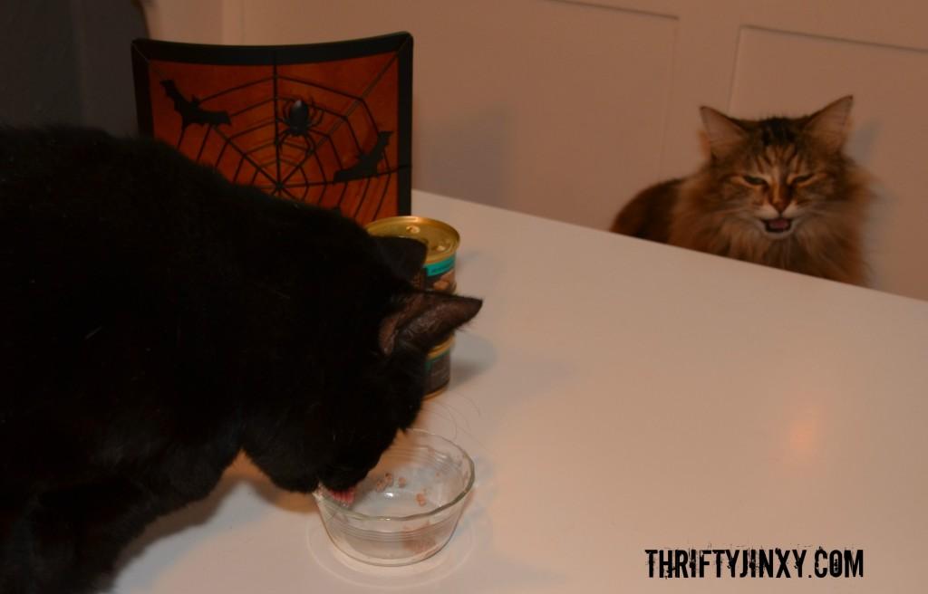 Lucky Wants Sheba Cat Food #ShebaCat #shop #cbias