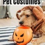 cutest disney pet costumes (1)