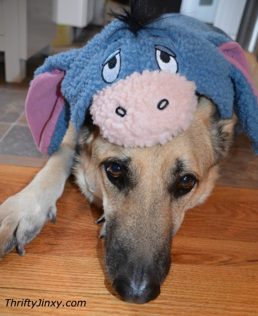 Disney Pet Eeyore Costume & Disney Pet Costumes for Cats and Dogs - Oh So Cute! - Thrifty Jinxy