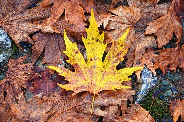 dried fall leaves