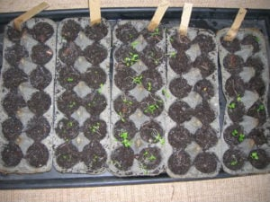 Start Your Garden Seedlings With Egg Carton Seeds