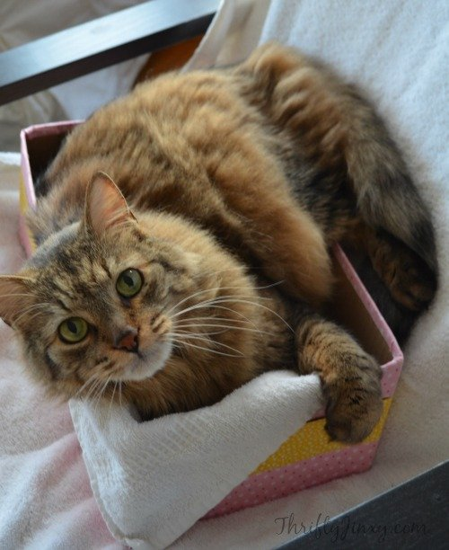 Duck Fabric Cat Box 2