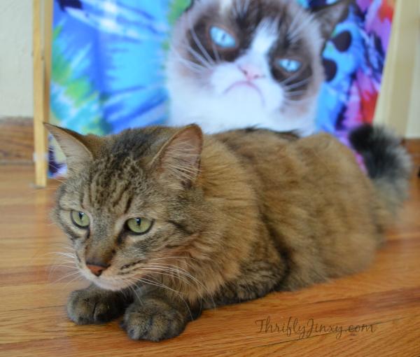 Peanut Grumpy Cat