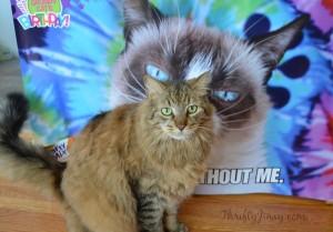 Celebrate Grumpy Cat's Birthday with Friskies