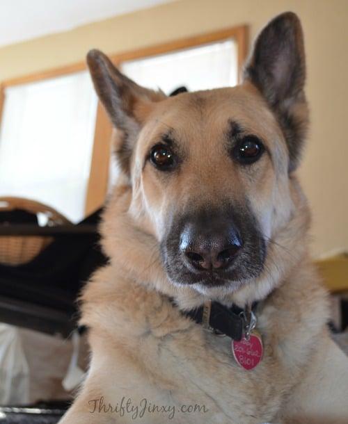 Valentine Dog Treats Recipe
