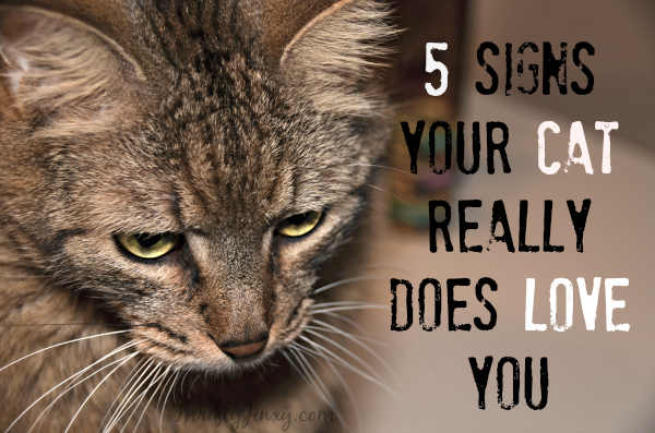 Signs Your Cat Loves You