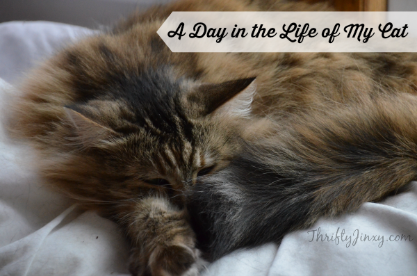 A Day in the Life of My Cat + a $25 Walmart Gift Card Reader Giveaway
