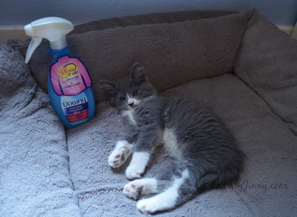 Downy Wrinkle Releaser Plus Pet Beds