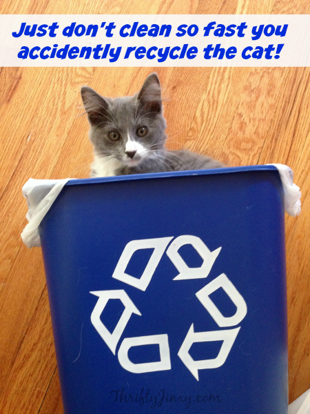 Recycle the Cat