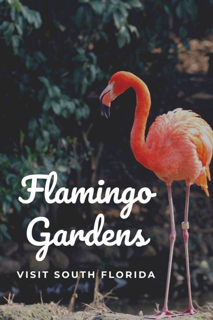 FLAMINGO GARDENS SOUTH FLORIDA