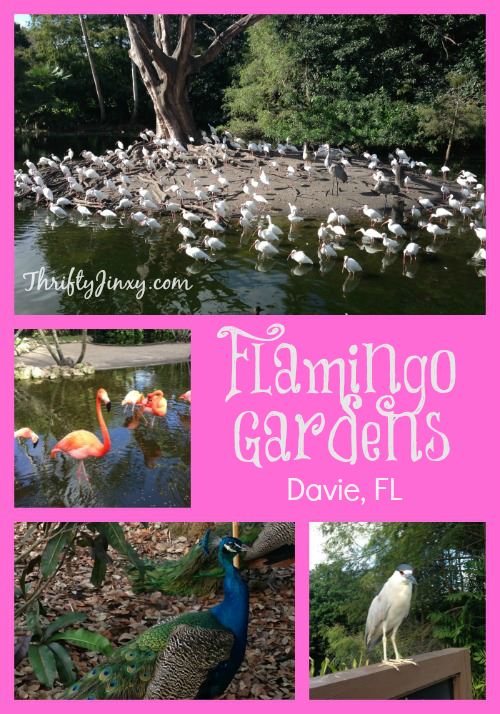 Flamingo Gardens – Davie, Florida – Botanical Gardens and Wildlife Sanctuary