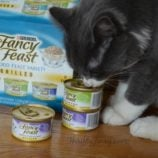 Stock Up and Save on Friskies and Fancy Feast #PetSmartCart