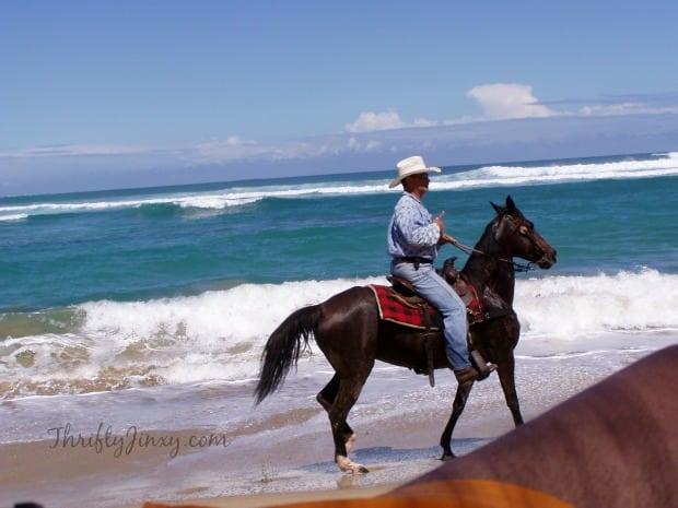 Paso Fino Horses Isabela Puerto Rico