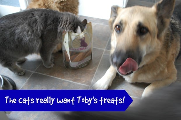 Natural Pet Treats