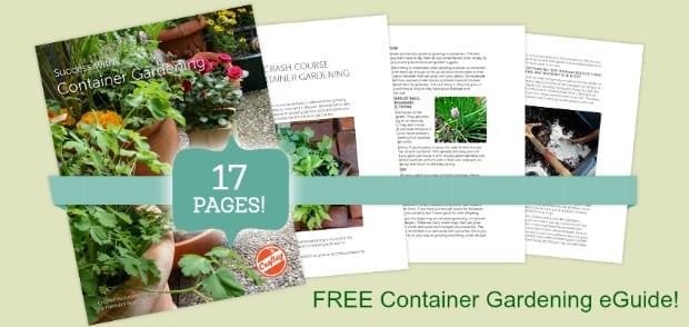 SuccessWithContainerGardening_carousel_1
