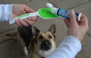 Make Curing Bad Dog Breath a Treat with Orapup