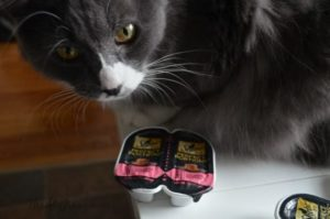 My Cats Try SHEBA PERFECT PORTIONS Entrees – B1G1Free Coupon + Reader Giveaway