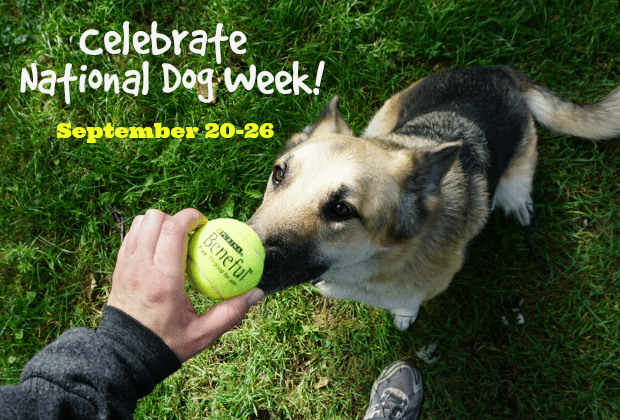 Celebrate National Dog Week Beneful