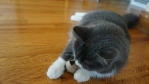 How to Make a Cat Toy in 2 Minutes + Natural Nutrition with Purina Muse Natural Cat Food