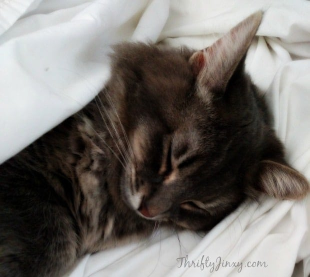Sleeping Cleo