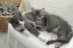 Adopting Kitten Pairs: Buddy Power!