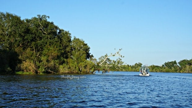Airboat Tours New Orleans >> Louisiana Swamp Tours: Airboat Fun and Natural Beauty - Thrifty Jinxy