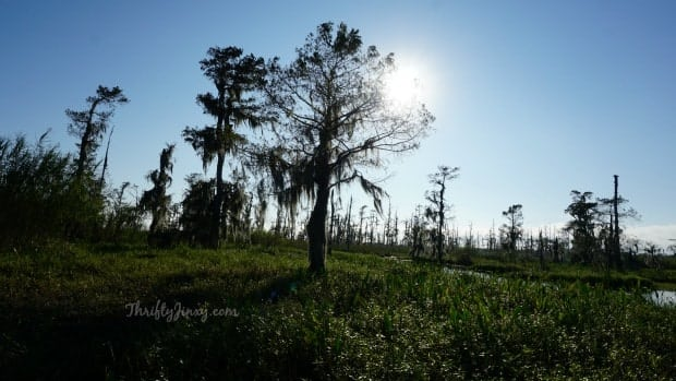 Louisiana Swamp Tours: Airboat Fun and Natural Beauty