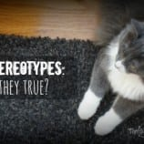 Cat Stereotypes – Are They True?