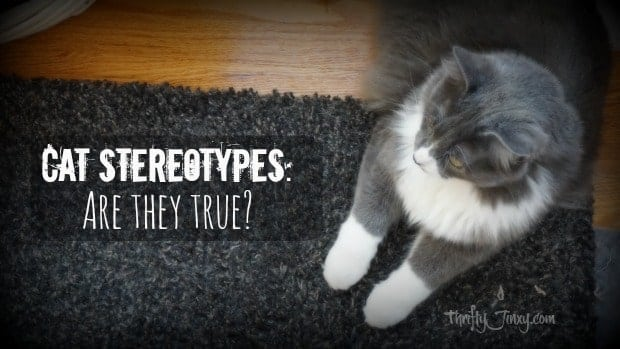 Cat Stereotypes- Are They True-