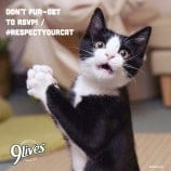 Join the #RespectYourCat Twitter Party March 28 – The Most Cat-tacular Event of the Season!