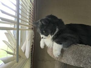 Window Blinds Safety for Cats and Kids