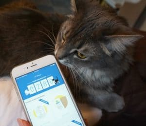 Million Meow Mission: Help Save Shelter Cats