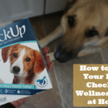 How to Give Your Pet a CheckUp Wellness Test at Home