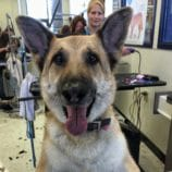 Petco Grooming De-shedding Treatment Makes a Happy Dog and Owner! + Reader Giveaway