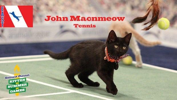 John Macnmeow Kitten