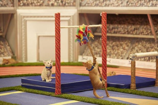 Kitten Summer Games High Jump