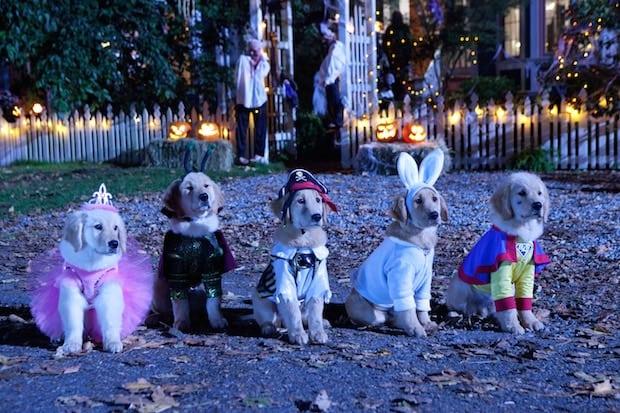 Freeform 13 Nights of Halloween Schedule 2017 - Thrifty Jinxy