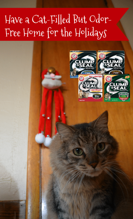 a-cat-filled-but-odor-free-home-for-the-holidays