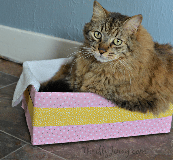 diy-cozy-kitty-nap-box
