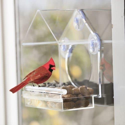 nature-anywhere-window-birdfeeder